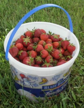 Strawberries in an ice cream bucket.